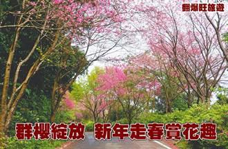 群櫻綻放 新年走春賞花趣