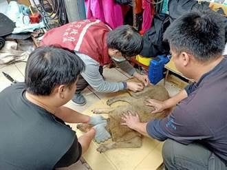 新泰塭仔圳195隻廠家犬隻正式有主人 動保處月底完成第一輪訪視