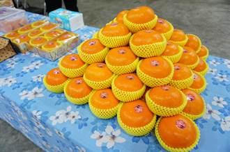 中市農業局輔導茂谷柑共同運銷 石岡特級品衝上每公斤170元高價