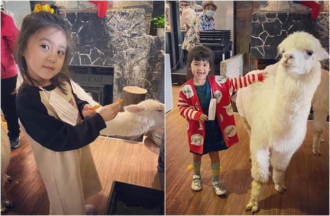 咘咘、Bo妞開心和羊駝互動。(圖/翻攝自臉書)