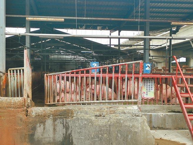 苗栗肉品市場的白毛豬冷凍肉品價格從元旦至今已上漲約10元。(謝明俊攝)