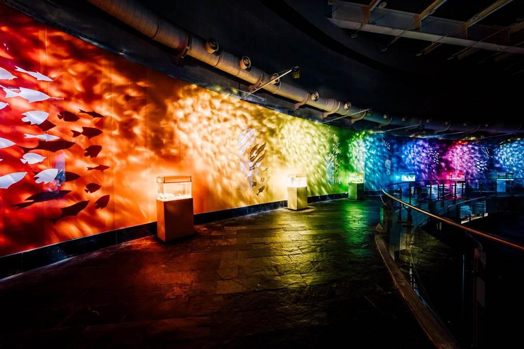 屏東海生館繼「海藻森林」被選為全台十大網美景點後,今年推出全新打卡點「色水廊道」。(謝佳潾攝)