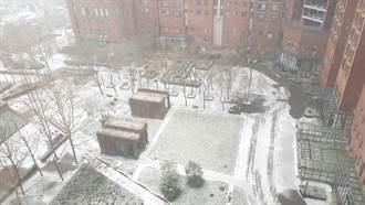 2021年第二場雪 北京又見冬雪飛舞