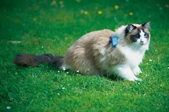 家貓追蹤計畫 記錄下牠們在外的冒險蹤跡