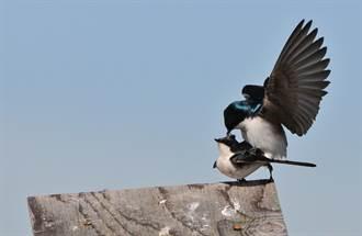 瞧 那隻鳥兒在幹嘛?