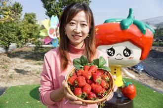莓苗教父耗時6年改良 新品種「優雪」問世