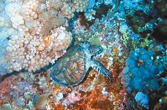 海底忙什麼 捕捉海龜萌磨背