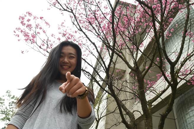 文化大學位於陽明山,校內種植櫻花,成為知名校園美景。(文化大學提供/李侑珊台北傳真)