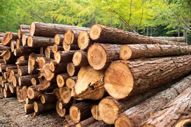 大陸今與紐西蘭簽署升級版自貿協定,紐西蘭的商品將有更多機會出口大陸,其中,紐西蘭99%木材和紙品將免關稅。(示意圖/達志影像/shutterstock)