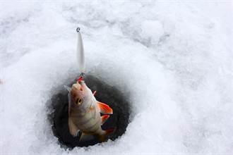 釣魚拉出金蟾抱鯉 魚被癩蝦蟆當坐騎 釣客看傻急放生