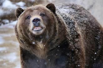 滑雪突遇棕熊一路追殺 男靠一招極限逃生