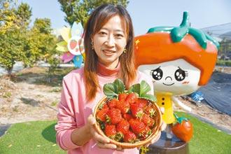神農出手 新品種草莓優雪大又甜