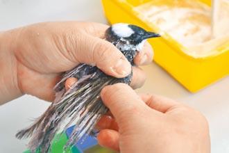 野鳥救傷去年近2千件 存活率不到5成