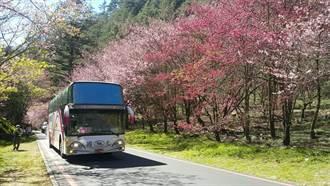 武陵賞櫻專車預售熱銷 國光客運比去年多2成
