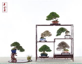 台灣盆栽第一人 決定在台收徒傳承技藝