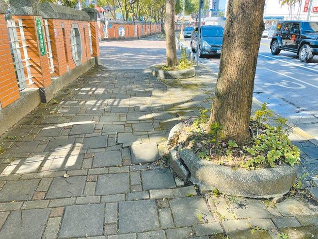 雙龍國小內部排水不良,人行步道又受樟樹竄根所苦,不少家長憂心孩童不慎跌跤。(黃婉婷攝)