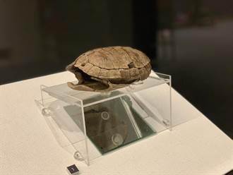 龜殼是平埔族招呼集合的器物?「牽手平埔」特展南科考古館登場