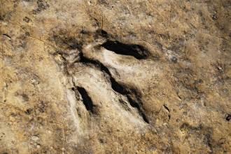 史上最好化石 童海灘上發現怪石 竟是2.2億年前恐龍腳印