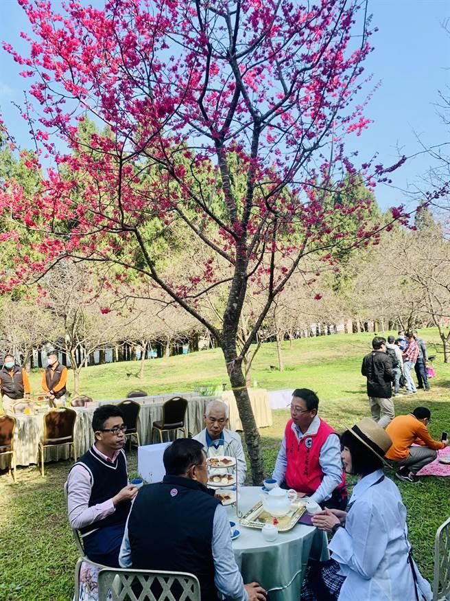 魚池鄉九族文化村,櫻花樹下的饗宴。(廖志晃攝)