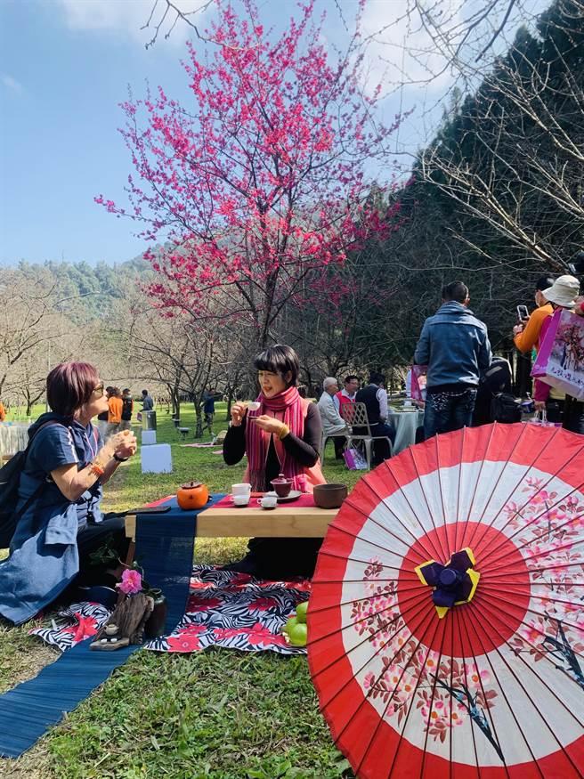 九族文化村在櫻花祭期間,將推出櫻花茶會。(廖志晃攝)