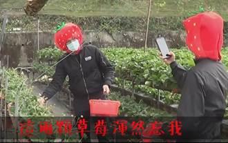 歹徒也是草莓控 大湖防搶演練不忘推銷農產