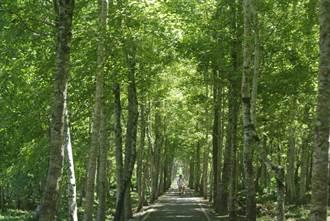 避開群聚走春趣 林田森林場域旅行去
