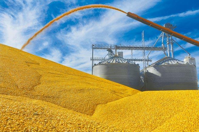 原物料黃小玉價格飆,台糖近期採購價上升,年後18公升沙拉油看漲。(美聯社)