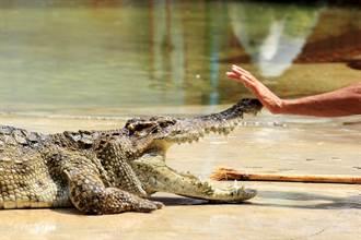 被醉漢瘋狂撫摸亂認媽 鱷魚忍5分鐘後凍未條