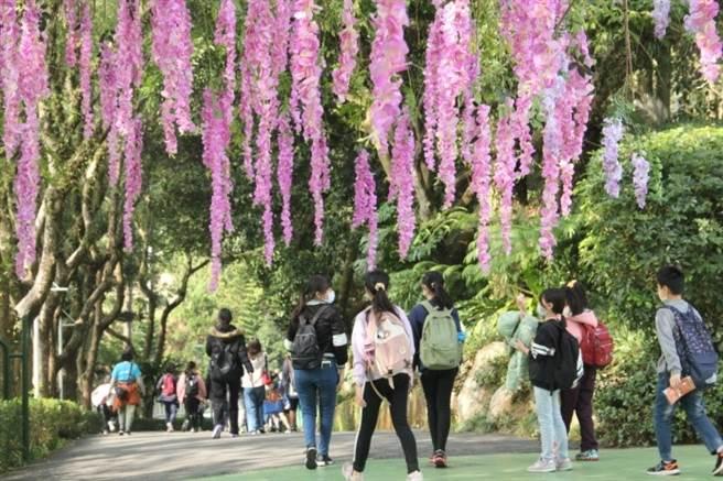 劍湖山世界美麗的紫藤花廊及充滿芬多精的林蔭步道。(劍湖山世界提供)
