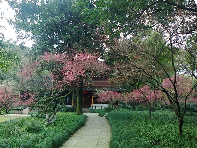 作者在杭州曾加入一支高齡登山隊,下山後茶敘的地點籠月樓。(作者提供)