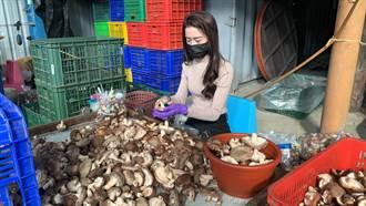 電眼正妹賣香菇引暴動 身分曝光網嗨翻:妹妹也仙氣逼人