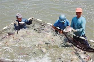 嘉縣新增養殖漁業生產區 比例提高至5成以上