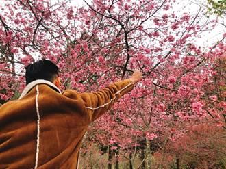 不出國的夢幻櫻花季來啦 全台5大賞櫻地遊程開賣
