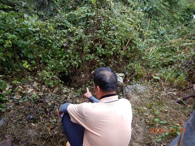達拉崗果園農友目擊黑熊鑽入樹叢。(公路總局二工處提供/陳淑娥台中傳真)