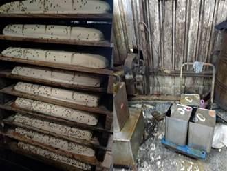 新北豆腐工廠成品上佈滿蒼蠅超噁 負責人喊冤:前妻惡意抹黑