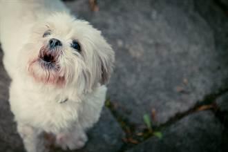 毛孩讀心術》農曆七月愛犬每晚吹狗螺 寵物溝通師吐真相主人秒淚崩