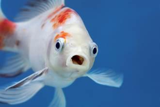 食道拉出血淋淋大魚 苦主崩潰:魚自己滑進去