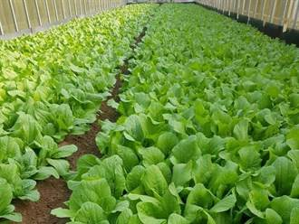 疫情導致銷量緊縮 有機農園自立自強