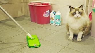年終大掃除別忘了毛孩 居家清潔4妙招 貓狗健康一整年