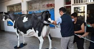 興大引進等比乳牛模擬教具 學生牛年擬真上陣接生