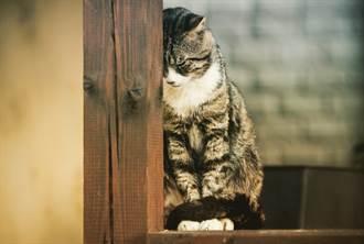 白貓不吃東西每天躺倒墓前 家人揭背後原因惹鼻酸