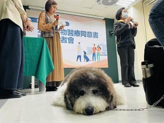 北市首推公版動物醫療同意書 協助飼主確認診療內容