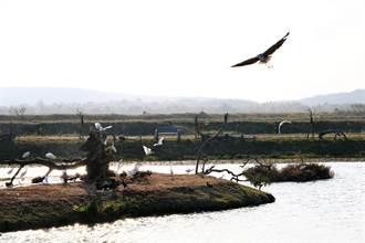 私人復育溼地超驚豔 龍鑾潭「鳥族8太空站」展現生態經濟軟實力