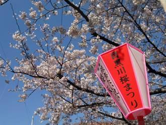 目黑川櫻花祭 目黒川の桜