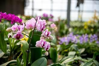 淨化空氣迎牛年 環保署:觀葉型開花盆栽增添過節氣氛