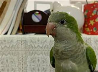 毛孩讀心術》找回走失鸚鵡卻「判若兩鳥」 溝通師一感應表情亮了