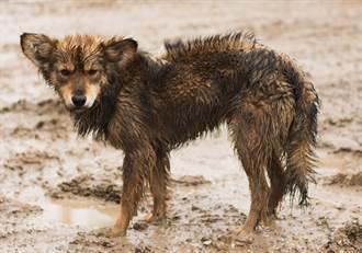 農場闖入流浪幼犬偷吃 主人驚覺是猛獸 不忍殺害大膽收編