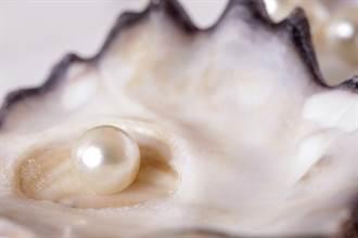 窮漁夫撿海螺掉出罕見橘色珍珠 3富商競標 豪開955萬收購