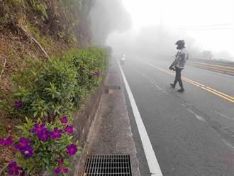 重機騎士坪林跑山摔車 山羌遭撞不幸喪命