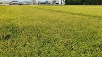 私有耕地375租約屆滿 續租或收回耕地申請受理至2/17止